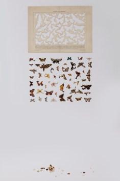 Gianluca Quaglia, Il luogo delle farfalle nostrali, 2015, intagli su tavola entomologica, 42x28.5 cm Foto Marcella Savino