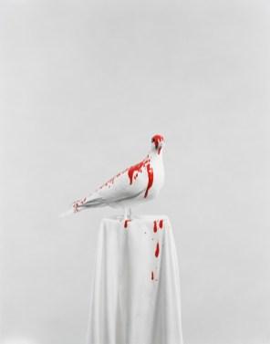 Julia Krahn, Die Taube, 2011 © Julia Krahn