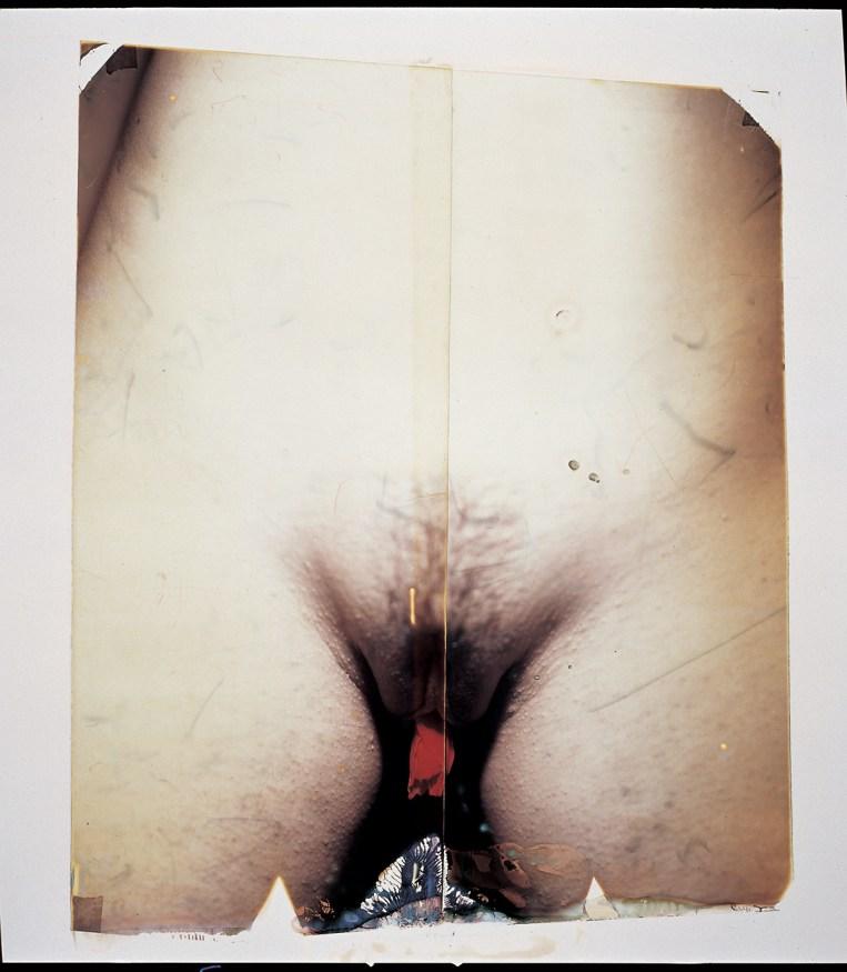 Paolo Gioli, Naturae, 2009, Polaroid 20x24'', acrylic, lens photograph