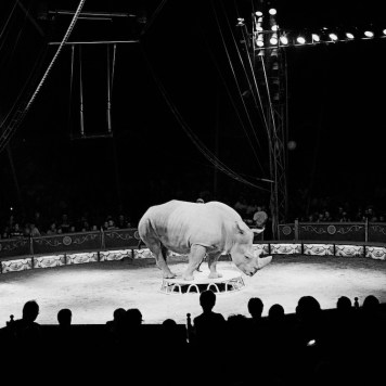 "Jože Suhadolnik dalla serie ""Cirkus/Circus"", 1999-2004"