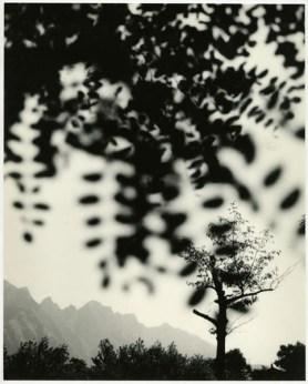 Paolo Monti, Alberi (sfocamento), 1953 - 1961 stampa ai sali d'argento su carta 36,2 x 29,2 cm