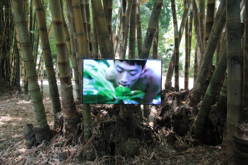 "Zheng Bo, Pteridophilia 1, 2016 – ongoing, video, duration 17min 14sec, project ""Garden of Flow"", Orto Botanico di Palermo, Palermo Photo: Wolfgang Träger Photo Courtesy: Manifesta 12 Palermo and the artist"