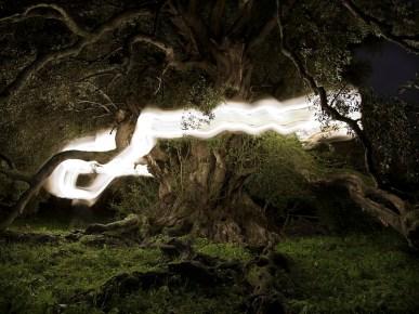 Ugo Ricciardi, Millenary Wild Olive Tree, 2018, Fine Art pigment print on Hahnemuehle Photo Rag Baryta paper, cm 90x120, edition: ed. 1/9, courtesy Ugo Ricciardi