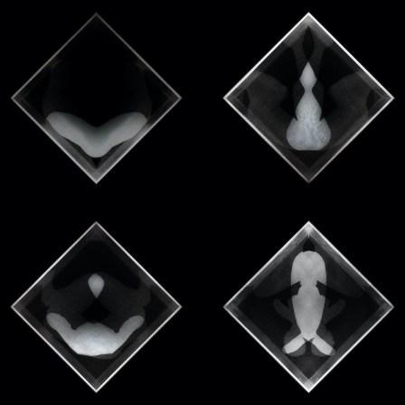 Manuel Scrima, Disembodiedness, 2013-2020, stampa su mattonella in ceramica, a pezzi, 10x10 cm ciascuno Courtesy l'artista e Fabbrica Eos, Milano