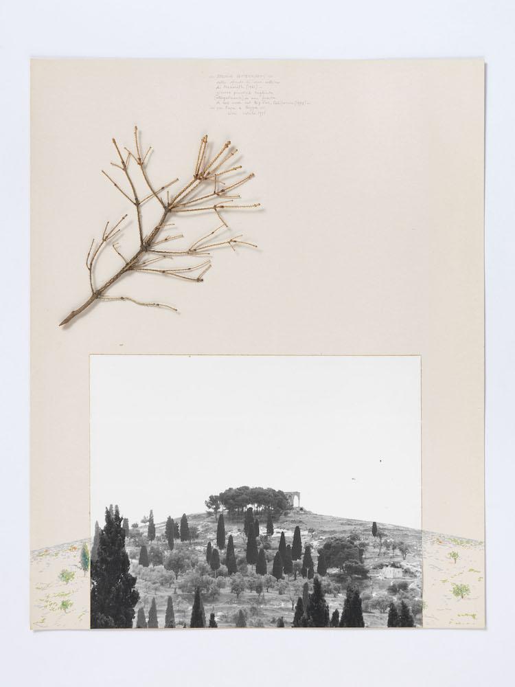 Cioni Carpi, Sehspass 01 (Sequoia semper virens), 1976 Photo credit Alessandro Zambianchi - Simply.it, Milano, Panza Collection, Mendrisio