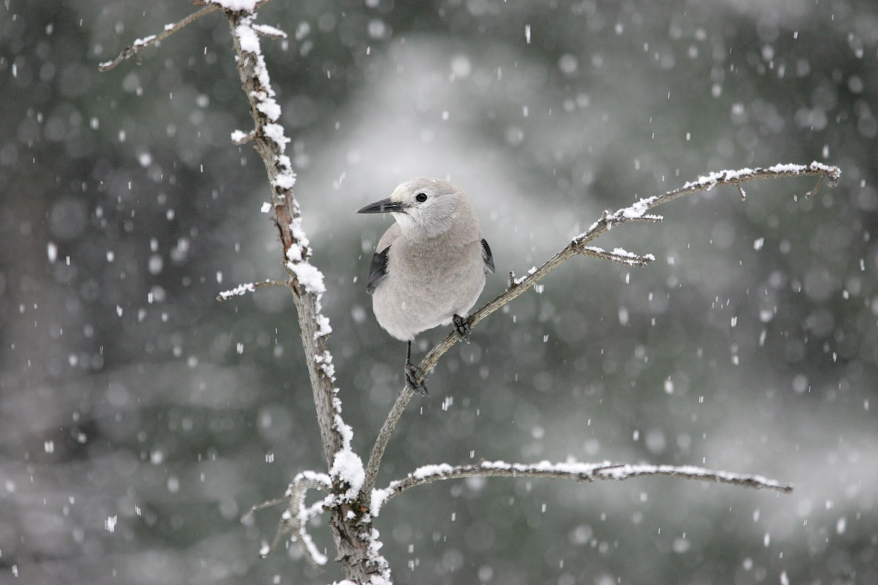 Birds The Word In Winter Help Feed Them Espoma