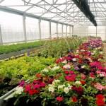 """Al """"Serpieri"""" è arrivata la primavera! Torna la vendita delle piante da fiore prodotte nell'Istituto"""