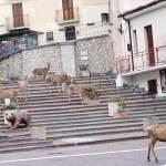 Villalago. 7 meravigliosi Cervi fanno colazione nelle aiuole in Piazza