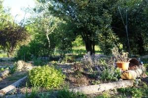 géobiologie jardin et évolution sprituel