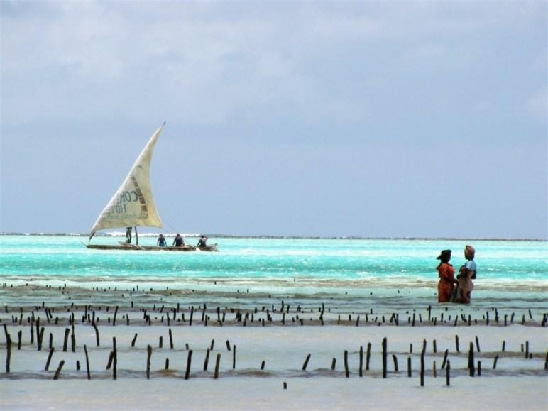 Collecte des algues - Jambiani - Zanzibar - Tanzanie