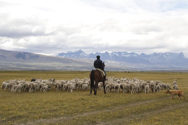 Awasi Patagonia - Puerto Natales - Chili