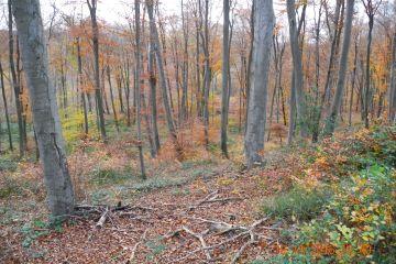 Sortie en forêt de Compiègne