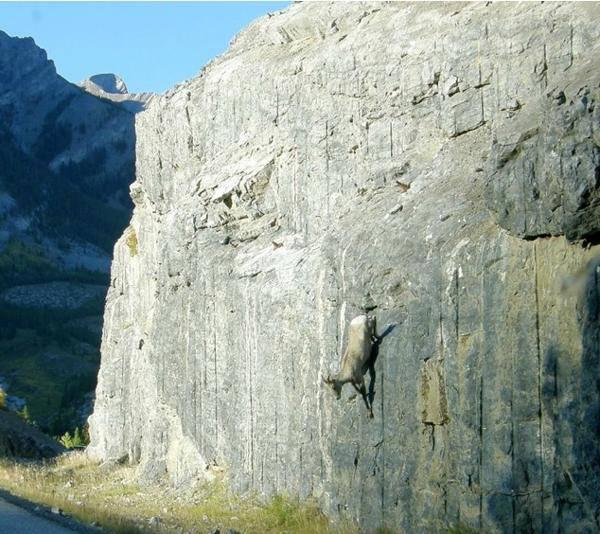 Wallpaper Falling Off Wall 13 Photos Hallucinantes De Ch 232 Vres Sur Des Falaises