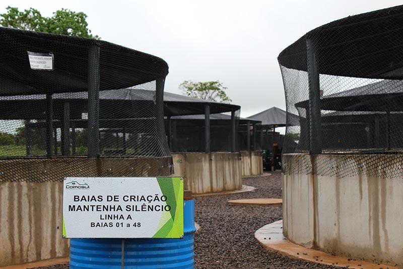 Fazenda de Jacarés em Corumbá - Caimasul (Foto: Esse Mundo É Nosso)