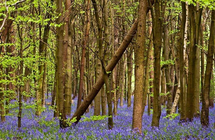 Cenários de Star Wars que existem de verdade - Whippendell Woods, Reino Unido (Foto via Shutterstock)