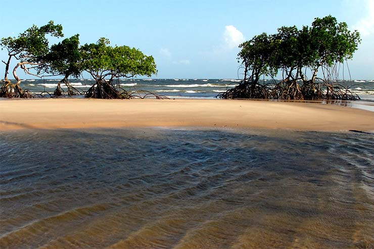 Ilhas do Brasil - Ilha de Marajó [Foto via Pauk (CC BY 2.0)]