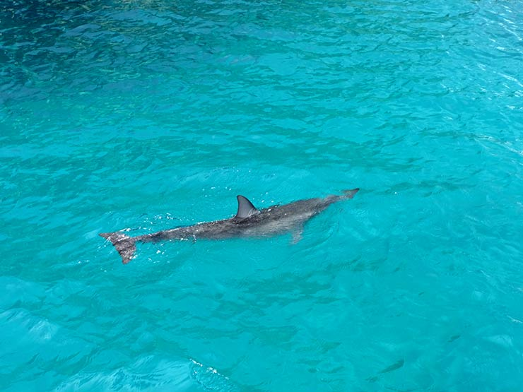 Golfinhos em Fernando de Noronha (Foto: Esse Mundo é Nosso)