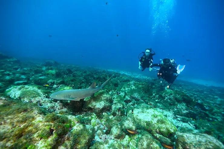 Mergulho em Noronha (Foto: Esse Mundo é Nosso)