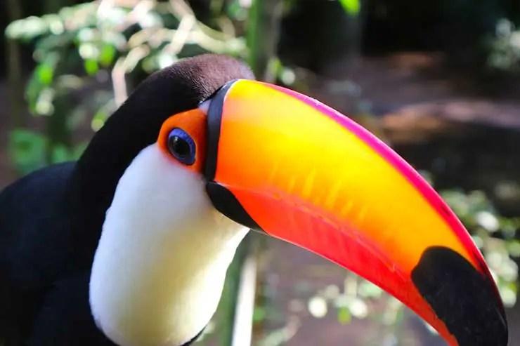 Quantos dias em Foz do Iguaçu: Parque das Aves (Foto: Esse Mundo é Nosso)
