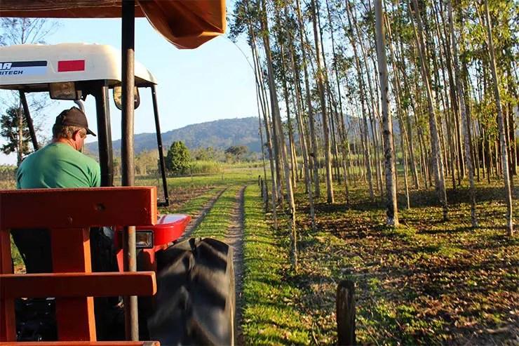 O que fazer em Joinville - Estrada Bonita (Foto: Esse Mundo É Nosso)