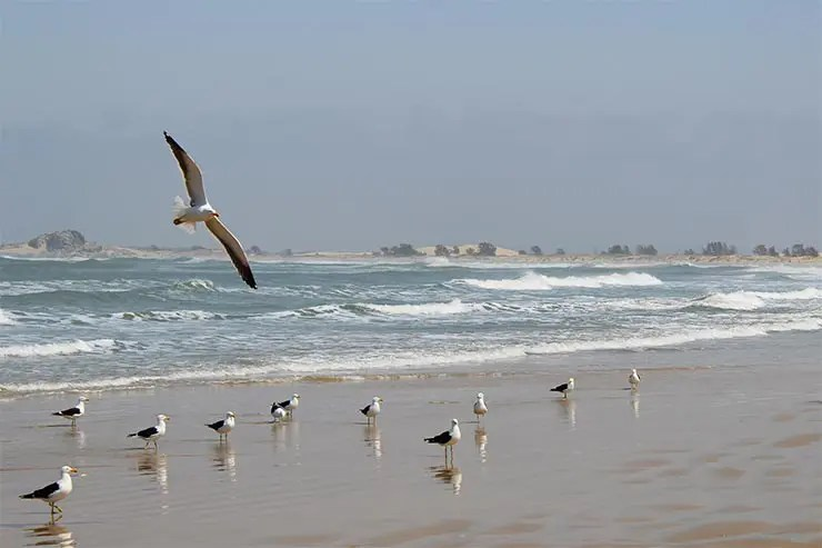 Praia do Cardoso no Farol de Santa Marta, Laguna/SC (Foto: Esse Mundo É Nosso)