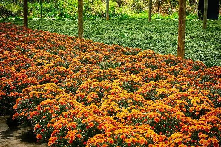 Holambra é a capital das flores Holambra tem arquitetura holandesa (Foto: Secretaria de Turismo de SP/Ken Chu - Expressão Studio)