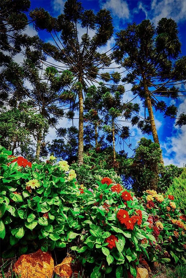 Cidades perto de São Paulo: Natureza em Santo Antônio do Pinhal (Foto: Secretaria de Turismo de SP/Ken Chu - Expressão Studio)