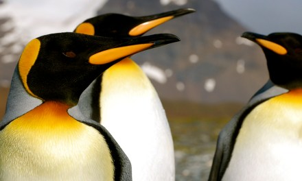 Quark Expeditions announces 2014-2015 Antarctic season