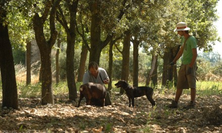 Crillon le Brave announces Provençal truffle hunting and wine weekends