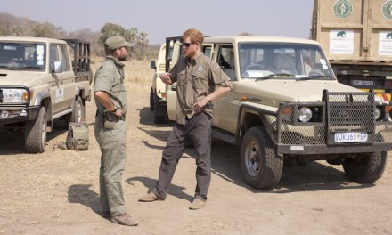 Prince Harry in '500 Elephants' conservation initiative