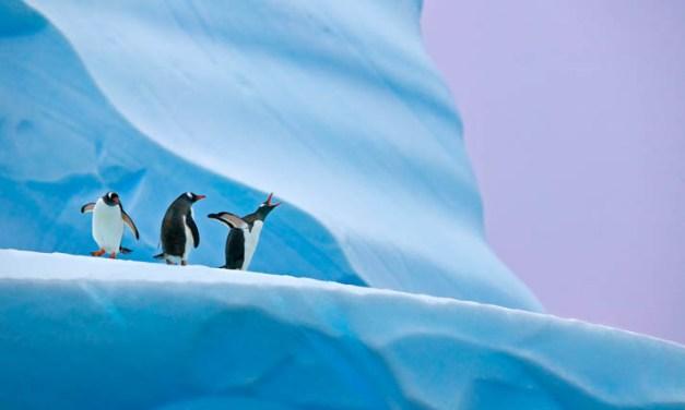 Capture Antarctica's magic with Natural World Safaris