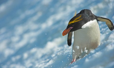 Capture Antarctica's magic with Natural World Safaris