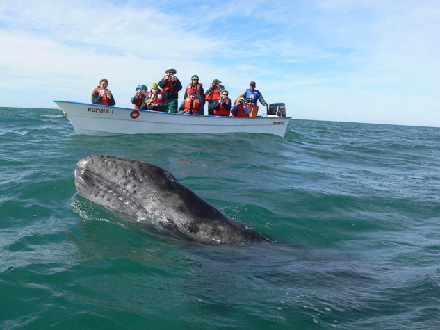 Explore Baja California's marine life with Naturetrek