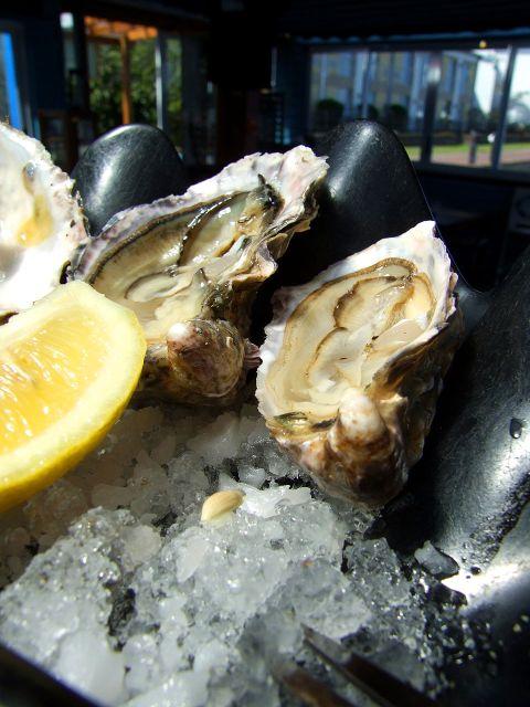 Oysters © hamper | Morguefile.com
