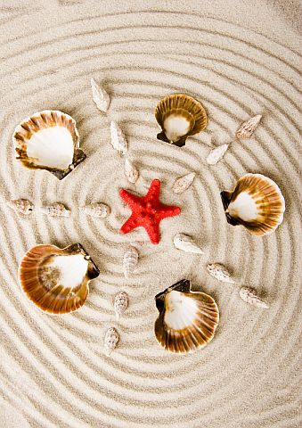 Seashells and Starfish © Janpietruszka | Dreamstime.com