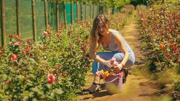 Rose picking at Chart farm Cape Town