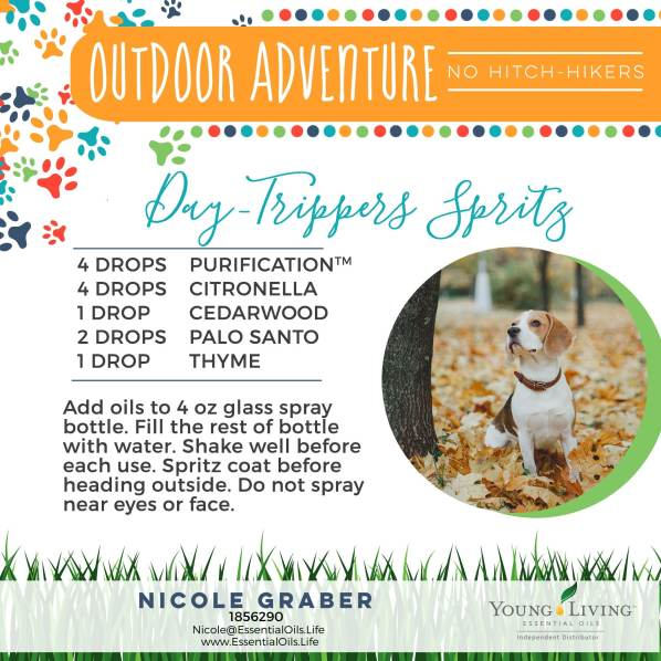 How To Make Dog Wipes With Essential Oils