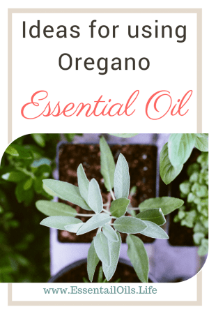 Ideas, tips, recipes and tricks for using oregano essential oil and oregano vitality