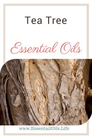 Learn more about tea tree essential oil and what you can do with it
