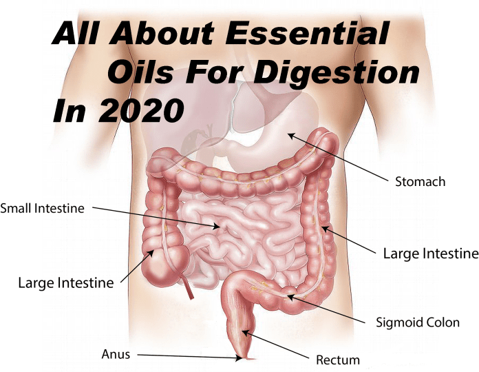 All about Essential oils for digestion in 2020