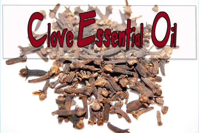 Clove Essential Oils for Aromatherapy