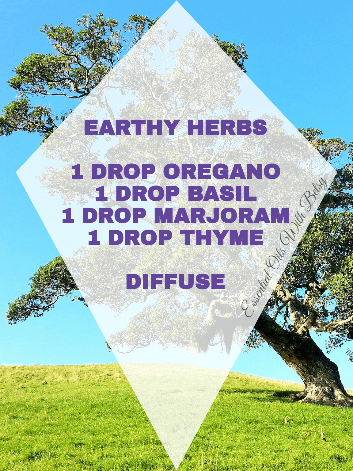 15 BRAND NEW ESSENTIAL OIL BLENDS EARTHY HERBS 1 DROP OREGANO 1 DROP BASIL 1 DROP MARJORAM 1 DROP THYME DIFFUSE