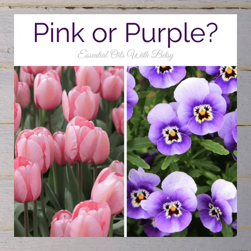 Pink or Purple?