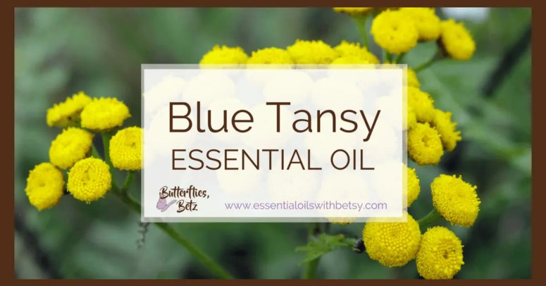 doTERRA Blue Tansy Essential Oil doTERRA Blue Tansy Oil is coming to doTERRA! At the2107 doTERRA convention, Dr. Hill announced that we will now carry doTERRA Blue Tansy Essential Oil. Blue Tansy oil is an exciting addition to our essential oil arsenal! Continue reading to learn about using Blue Tansy essential oil. TIP: You can read a list of all new doTERRA oils in 2017HERE.
