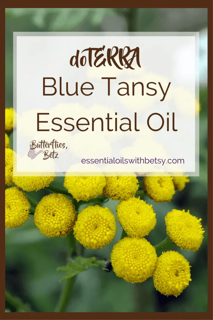 doTERRA Blue Tansy Essential Oil doTERRA Blue Tansy Oil is coming to doTERRA! At the2107 doTERRA convention, Dr. Hill announced that we will now carry doTERRA Blue Tansy Essential Oil. Blue Tansy oil is an exciting addition to our essential oil arsenal! Continue reading to learn about using Blue Tansy essential oil. TIP: You can read a list of all new doTERRA oils in 2017HERE. doTERRA Blue Tansy Essential Oil Benefits