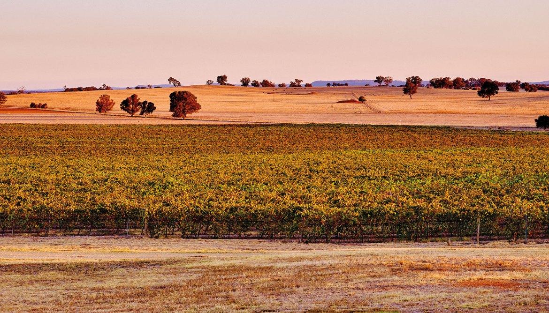 Rutherglen Estates Vineyard