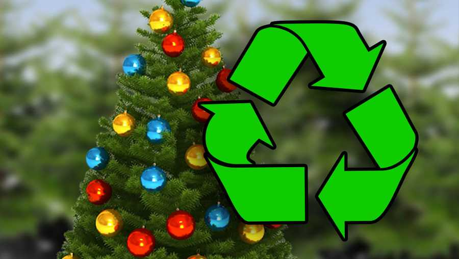 Bellaire launches annual Christmas tree-cycling dropoff