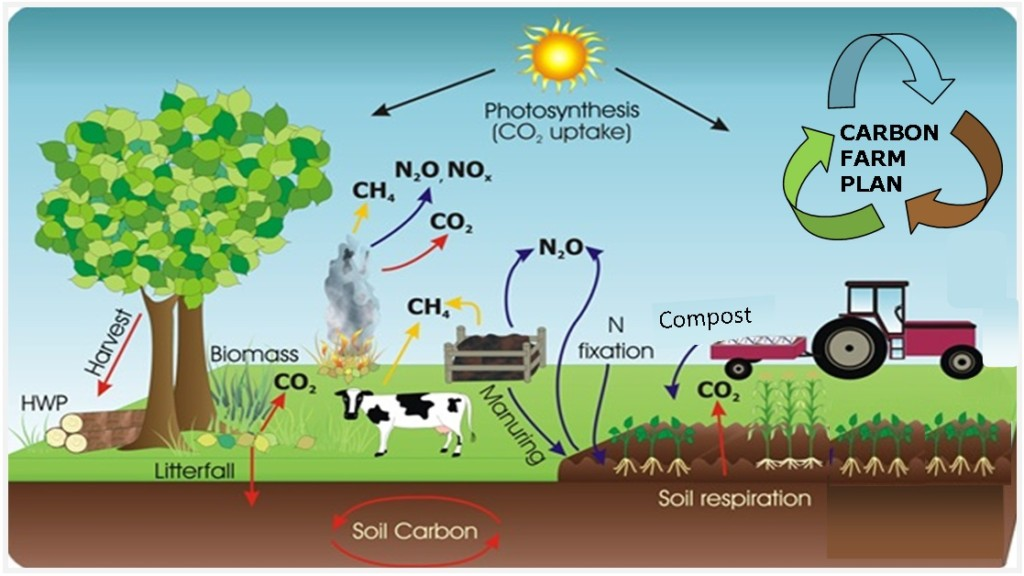 Composting For Carbon Sequestration « The EssentiaList
