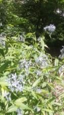 greenislandgardens
