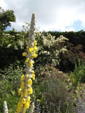 Beth Chatto Gardens (12)
